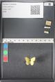 http://mczbase.mcz.harvard.edu/specimen_images/ent-lepidoptera/images/2011_03_17/IMG_077231.JPG