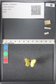 http://mczbase.mcz.harvard.edu/specimen_images/ent-lepidoptera/images/2011_03_17/IMG_077235.JPG