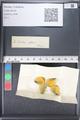 http://mczbase.mcz.harvard.edu/specimen_images/ent-lepidoptera/images/2011_03_17/IMG_077245.JPG
