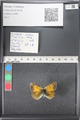 http://mczbase.mcz.harvard.edu/specimen_images/ent-lepidoptera/images/2011_03_18/IMG_077389.JPG