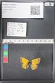 http://mczbase.mcz.harvard.edu/specimen_images/ent-lepidoptera/images/2011_03_18/IMG_077391.JPG