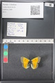 http://mczbase.mcz.harvard.edu/specimen_images/ent-lepidoptera/images/2011_03_18/IMG_077392.JPG