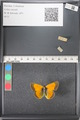 http://mczbase.mcz.harvard.edu/specimen_images/ent-lepidoptera/images/2011_03_18/IMG_077398.JPG