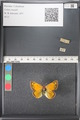 http://mczbase.mcz.harvard.edu/specimen_images/ent-lepidoptera/images/2011_03_18/IMG_077402.JPG