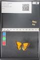 http://mczbase.mcz.harvard.edu/specimen_images/ent-lepidoptera/images/2011_03_18/IMG_077403.JPG