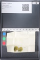 http://mczbase.mcz.harvard.edu/specimen_images/ent-lepidoptera/images/2011_03_18/IMG_077443.JPG
