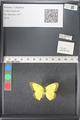 http://mczbase.mcz.harvard.edu/specimen_images/ent-lepidoptera/images/2011_03_18/IMG_077473.JPG