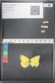 http://mczbase.mcz.harvard.edu/specimen_images/ent-lepidoptera/images/2011_03_18/IMG_077474.JPG