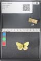 http://mczbase.mcz.harvard.edu/specimen_images/ent-lepidoptera/images/2011_03_18/IMG_077504.JPG