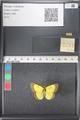 http://mczbase.mcz.harvard.edu/specimen_images/ent-lepidoptera/images/2011_03_18/IMG_077505.JPG