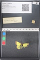http://mczbase.mcz.harvard.edu/specimen_images/ent-lepidoptera/images/2011_03_18/IMG_077543.JPG
