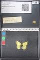 http://mczbase.mcz.harvard.edu/specimen_images/ent-lepidoptera/images/2011_03_18/IMG_077544.JPG