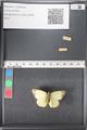 http://mczbase.mcz.harvard.edu/specimen_images/ent-lepidoptera/images/2011_03_21/IMG_077555.JPG