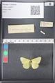 http://mczbase.mcz.harvard.edu/specimen_images/ent-lepidoptera/images/2011_03_21/IMG_077559.JPG