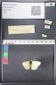 http://mczbase.mcz.harvard.edu/specimen_images/ent-lepidoptera/images/2011_03_21/IMG_077560.JPG