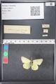 http://mczbase.mcz.harvard.edu/specimen_images/ent-lepidoptera/images/2011_03_21/IMG_077562.JPG