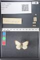 http://mczbase.mcz.harvard.edu/specimen_images/ent-lepidoptera/images/2011_03_21/IMG_077563.JPG