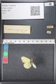 http://mczbase.mcz.harvard.edu/specimen_images/ent-lepidoptera/images/2011_03_21/IMG_077564.JPG