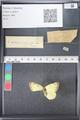 http://mczbase.mcz.harvard.edu/specimen_images/ent-lepidoptera/images/2011_03_21/IMG_077565.JPG