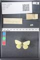 http://mczbase.mcz.harvard.edu/specimen_images/ent-lepidoptera/images/2011_03_21/IMG_077566.JPG