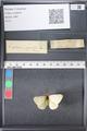 http://mczbase.mcz.harvard.edu/specimen_images/ent-lepidoptera/images/2011_03_21/IMG_077567.JPG
