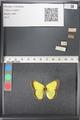 http://mczbase.mcz.harvard.edu/specimen_images/ent-lepidoptera/images/2011_03_21/IMG_077568.JPG