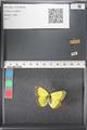 http://mczbase.mcz.harvard.edu/specimen_images/ent-lepidoptera/images/2011_03_21/IMG_077571.JPG