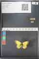 http://mczbase.mcz.harvard.edu/specimen_images/ent-lepidoptera/images/2011_03_21/IMG_077572.JPG