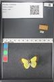 http://mczbase.mcz.harvard.edu/specimen_images/ent-lepidoptera/images/2011_03_21/IMG_077573.JPG