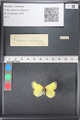http://mczbase.mcz.harvard.edu/specimen_images/ent-lepidoptera/images/2011_03_21/IMG_077576.JPG