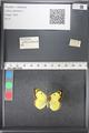 http://mczbase.mcz.harvard.edu/specimen_images/ent-lepidoptera/images/2011_03_21/IMG_077580.JPG