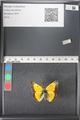 http://mczbase.mcz.harvard.edu/specimen_images/ent-lepidoptera/images/2011_03_21/IMG_077603.JPG