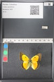 http://mczbase.mcz.harvard.edu/specimen_images/ent-lepidoptera/images/2011_03_21/IMG_077605.JPG