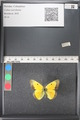 http://mczbase.mcz.harvard.edu/specimen_images/ent-lepidoptera/images/2011_03_21/IMG_077608.JPG