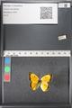 http://mczbase.mcz.harvard.edu/specimen_images/ent-lepidoptera/images/2011_03_21/IMG_077609.JPG