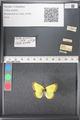 http://mczbase.mcz.harvard.edu/specimen_images/ent-lepidoptera/images/2011_03_21/IMG_077615.JPG
