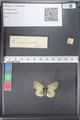 http://mczbase.mcz.harvard.edu/specimen_images/ent-lepidoptera/images/2011_03_21/IMG_077634.JPG