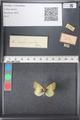 http://mczbase.mcz.harvard.edu/specimen_images/ent-lepidoptera/images/2011_03_21/IMG_077635.JPG