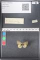 http://mczbase.mcz.harvard.edu/specimen_images/ent-lepidoptera/images/2011_03_21/IMG_077636.JPG