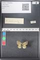http://mczbase.mcz.harvard.edu/specimen_images/ent-lepidoptera/images/2011_03_21/IMG_077637.JPG