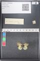 http://mczbase.mcz.harvard.edu/specimen_images/ent-lepidoptera/images/2011_03_21/IMG_077638.JPG
