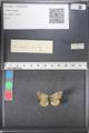 http://mczbase.mcz.harvard.edu/specimen_images/ent-lepidoptera/images/2011_03_21/IMG_077642.JPG