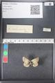 http://mczbase.mcz.harvard.edu/specimen_images/ent-lepidoptera/images/2011_03_21/IMG_077643.JPG