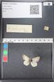 http://mczbase.mcz.harvard.edu/specimen_images/ent-lepidoptera/images/2011_03_21/IMG_077645.JPG