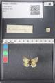 http://mczbase.mcz.harvard.edu/specimen_images/ent-lepidoptera/images/2011_03_21/IMG_077646.JPG