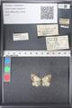 http://mczbase.mcz.harvard.edu/specimen_images/ent-lepidoptera/images/2011_03_21/IMG_077647.JPG