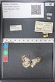 http://mczbase.mcz.harvard.edu/specimen_images/ent-lepidoptera/images/2011_03_21/IMG_077648.JPG