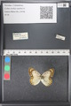 http://mczbase.mcz.harvard.edu/specimen_images/ent-lepidoptera/images/2011_03_21/IMG_077649.JPG