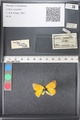 http://mczbase.mcz.harvard.edu/specimen_images/ent-lepidoptera/images/2011_03_21/IMG_077652.JPG