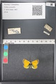 http://mczbase.mcz.harvard.edu/specimen_images/ent-lepidoptera/images/2011_03_21/IMG_077655.JPG